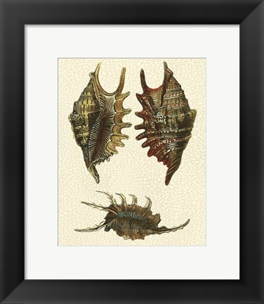 Framed Crackled Antique Shells V Print