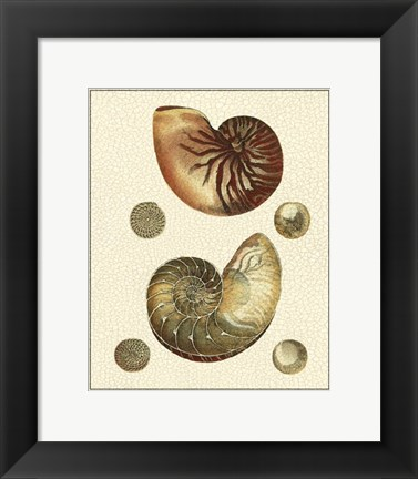 Framed Crackled Antique Shells VII Print