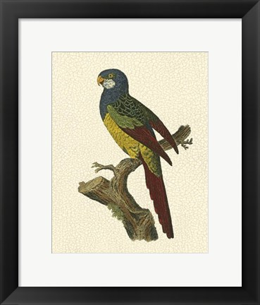 Framed Crackled Antique Parrot IV Print