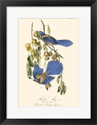 Framed Audubon Florida Jays Print