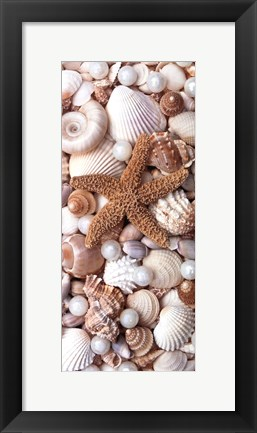 Framed Shell Menagerie II Print