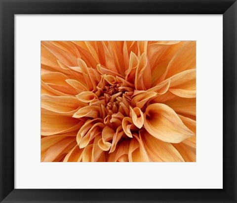 Framed Graphic Dahlia I Print