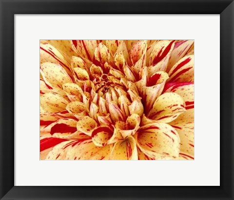 Framed Graphic Dahlia III Print