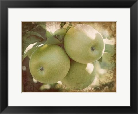 Framed Vintage Apples III Print