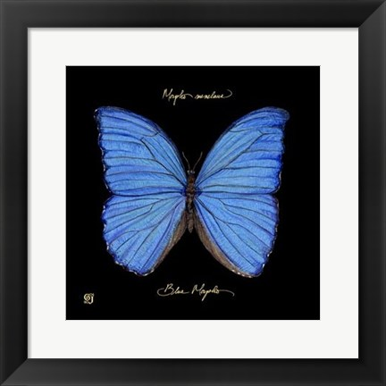 Framed Striking Butterfly I Print