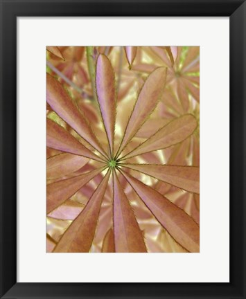 Framed Woodland Plants in Red II Print