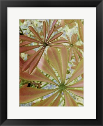Framed Woodland Plants in Red III Print