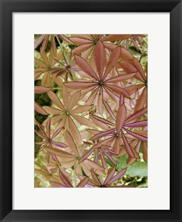 Framed Woodland Plants in Red IV Print