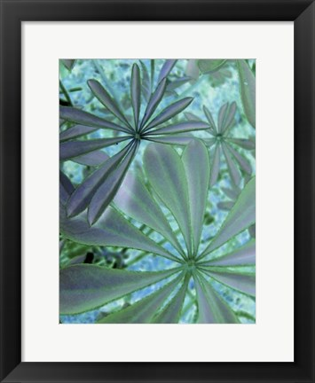 Framed Woodland Plants in Blue III Print
