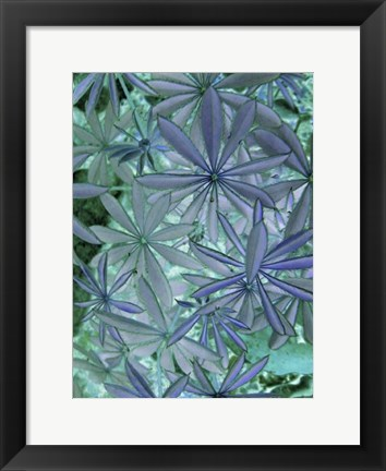 Framed Woodland Plants in Blue IV Print
