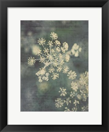 Framed Queen Ann's Lace III Print