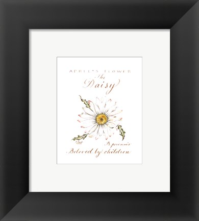 Framed April's Flower, The Daisy Print