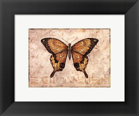 Framed Butterfly VI Print