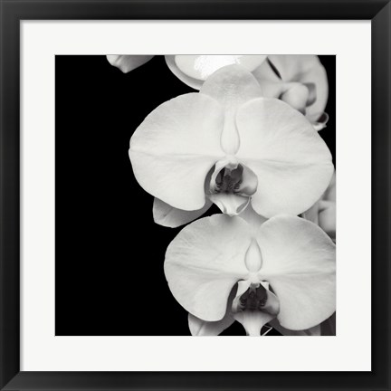 Framed Orchid Portrait II Print