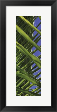Framed Palm Collection IV Print