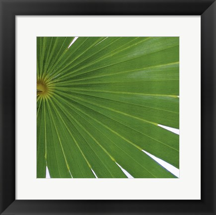 Framed Exposed Palm II Print