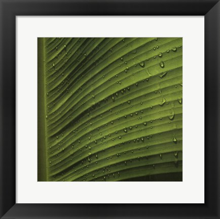 Framed Perfect Leaf II Print