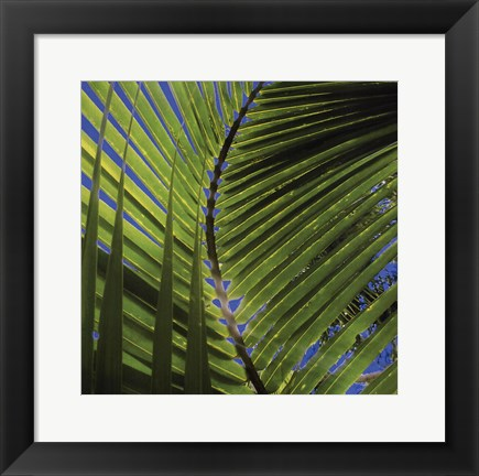 Framed Palm Collection III Print