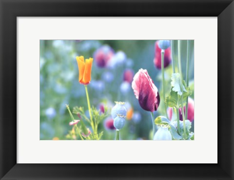Framed Poppy Design Print