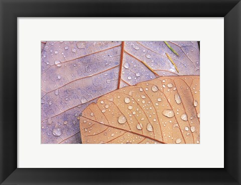 Framed Waterdrops on Magnolia Journal Print