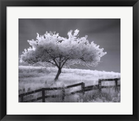 Framed Ethereal Tree Print