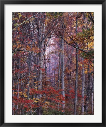 Framed Glowing Autumn Forest, Virginia Print