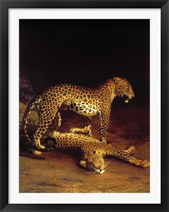 Framed Two Leopards Playing in the Exeter Change Menagerie Print