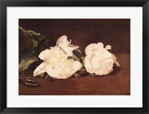 Framed Branch of White Peonies and Secateurs, 1864 Print