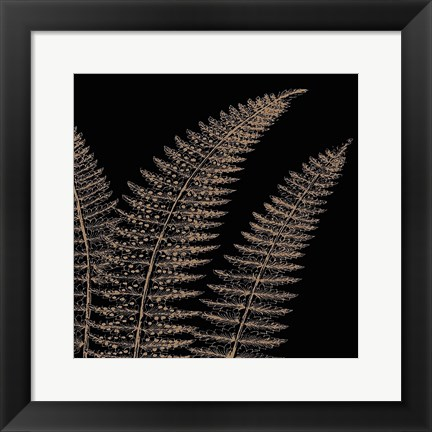 Framed Fern II (on black) Print