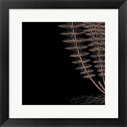 Framed Fern III (on black) Print