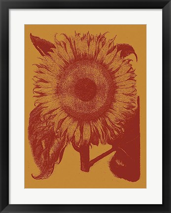 Framed Sunflower 15 Print