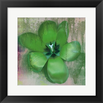 Framed Tulip Fresco (green) Print