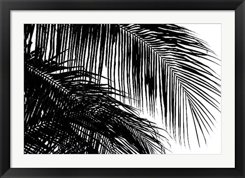 Framed Palms 3 Print