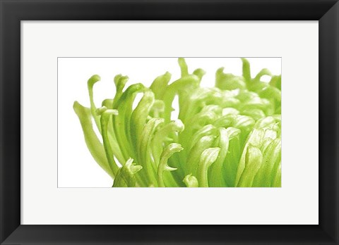 Framed Green Bloom 1 Print