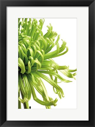 Framed Green Bloom 2 Print