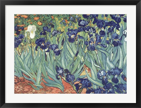 Framed Irises in the Garden Print