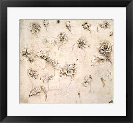 Framed Study of the Flowers of Grass-like Plants Print