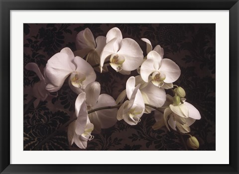 Framed Bountiful Orchids Print