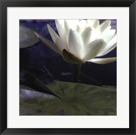 Framed Water Lillies II Print