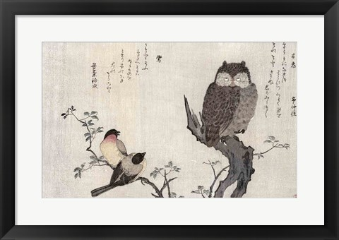 Framed Owl and two Eastern Bullfinches Print