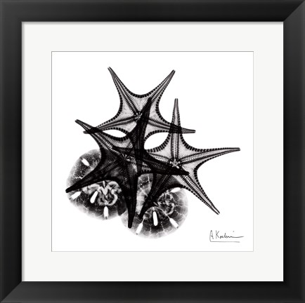Framed X-ray Starfish & Sand Dollar BW Print