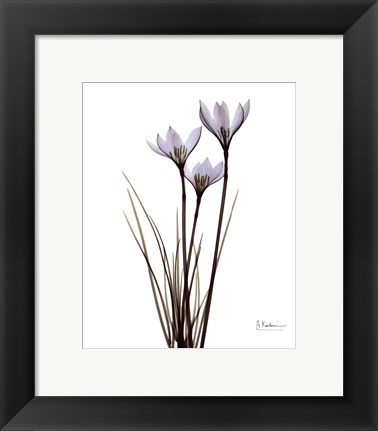 Framed Blue Floral X-ray Rain Lily Print