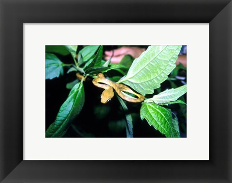 Framed Tree Snake Photograph Print