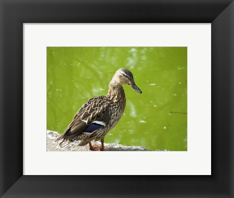 Framed Duck Print