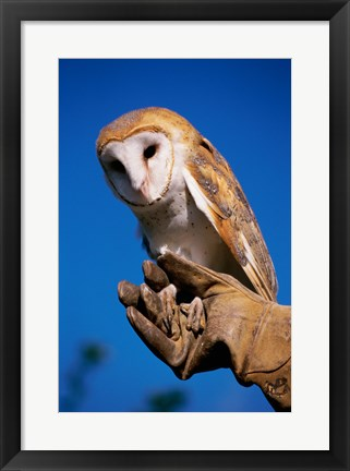 Framed Barn Owl on Hand Print