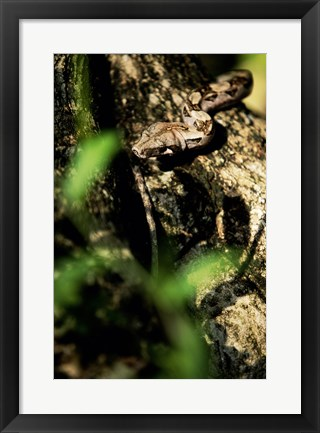 Framed Close-up of a snake on the branch of a tree Print