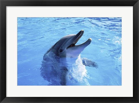 Framed Dolphin Sea World, San Diego, California Print