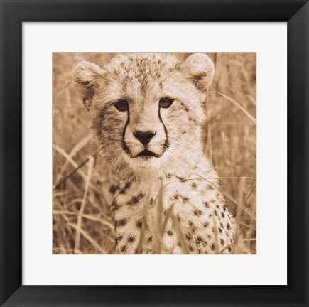 Framed Young Cheetah Print