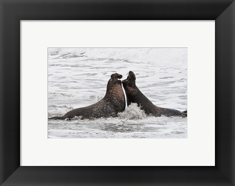 Framed Alpha Seals Print
