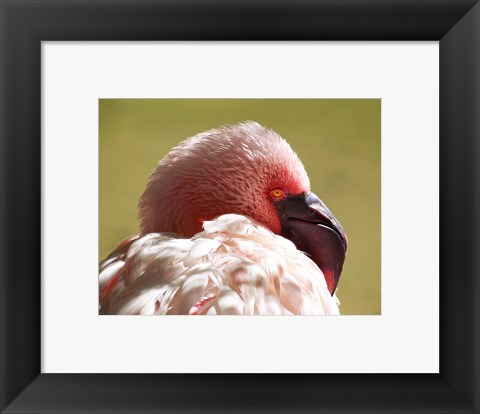 Framed Flamingos Face Close Up Print